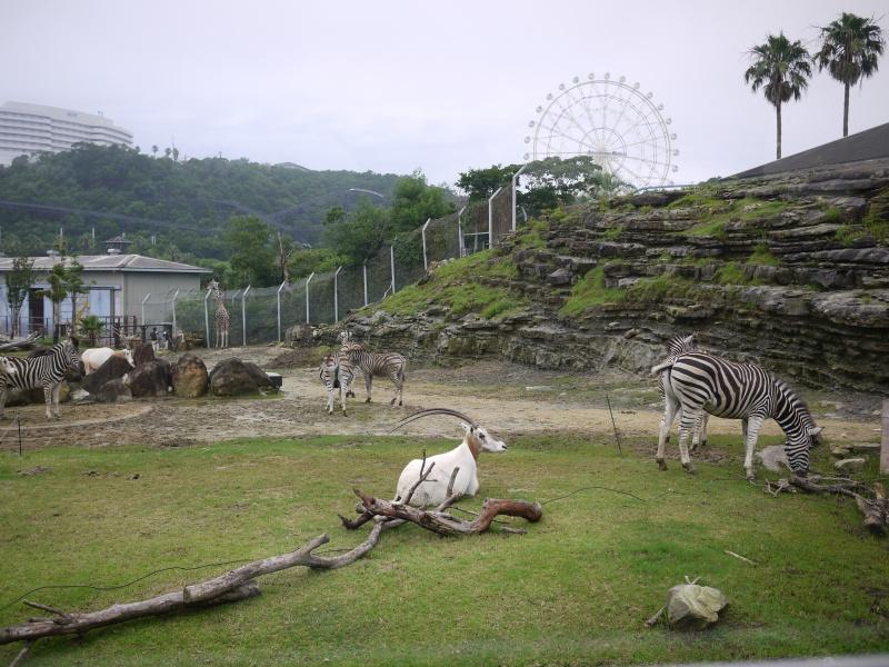 Wakayama 2015 ~ 062