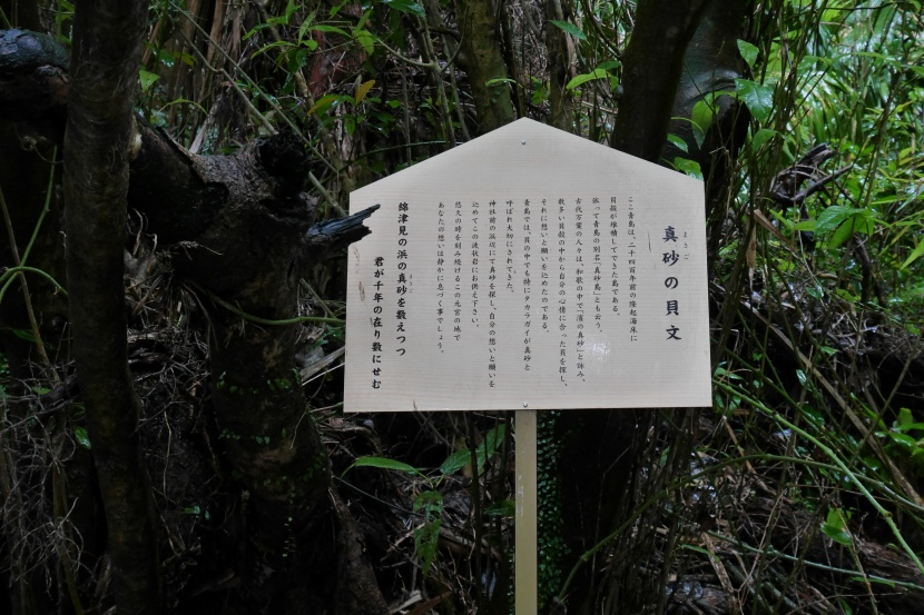 MIYAZAKI 0155